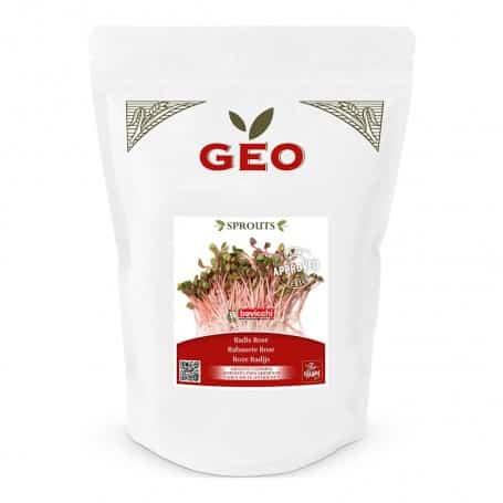 graines de radis rose à germer