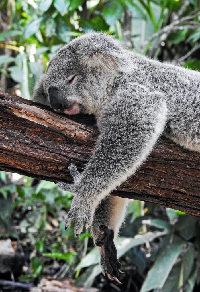 troubles du sommeil et naturopathie